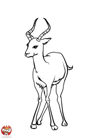 Coloriage: Antilope
