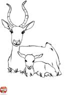 Antilope et son bébé