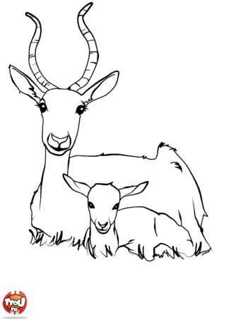 Coloriage: Antilope et son bébé