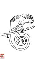 Petit caméléon