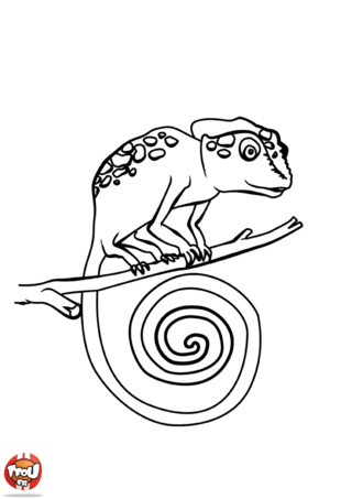 Coloriage: Petit caméléon