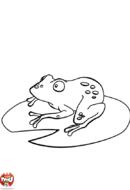Grenouille sur un nénuphar