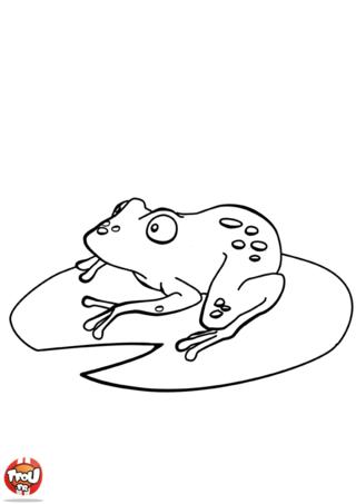 Coloriage: Grenouille sur un nénuphar