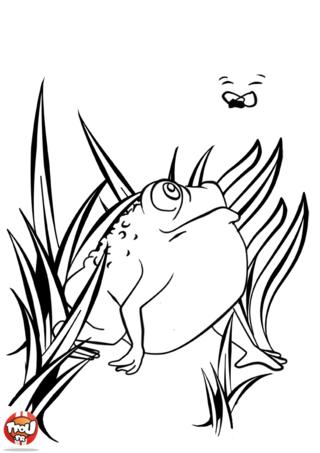 Coloriage: Le crapaud et la mouche
