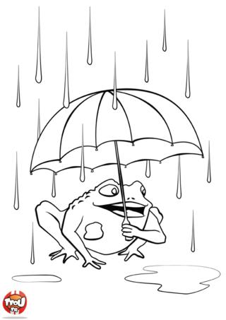 Coloriage: Crapaud sous la pluie