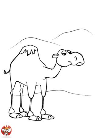Coloriage: Dromadaire dans le désert