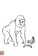 Gorille et banane