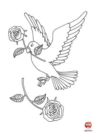 La colombe est un des symboles de l'amour. Tu as du en voir lors de la célébration de mariage. Imprime et colorie cette jolie colombe pour la Saint Valentin !