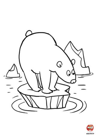Il est marrant cet ours sur son bout de banquise. Alors va sur TFou.fr et imprime gratuitement ce coloriage pour enfants. Cet ours faisait une sieste paisiblement quand soudain il entendit un bruit qui le réveilla. Qu'elle surprise lorsqu'il ouvrit ses paupières ! Il se retrouva sur un petit bout de banquise entouré d'eau. Ce n'est pas un problème car les ours savent nager mais lui n'a pas envie de se mouiller ?! Aide l'ours à aller dans l'eau en imprimant ce coloriage sur TFou.fr. Colorie-le avec de jolies couleurs ou fait de jolis dessins pour le pousser à aller dans l'eau !