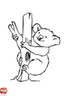 Koala heureux