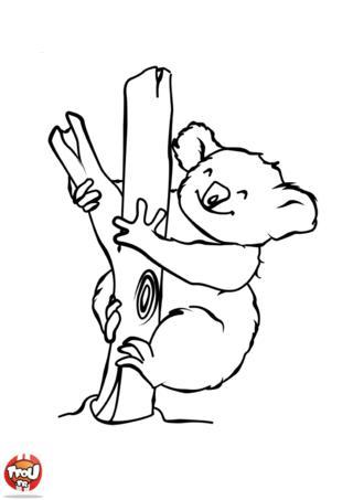 Coloriage: Koala heureux
