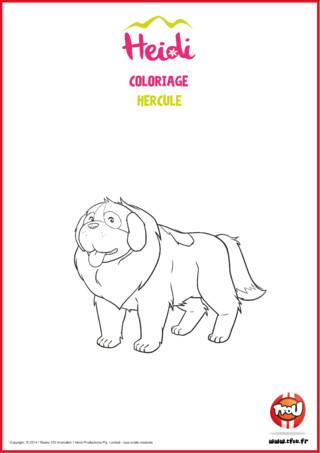 Coloriage : imprime vite ton coloriage de ta nouvelle série Heidi. Colorie avec de belles couleurs le chien d'Heidi : Hercule. Compagnon tendre et loyal, il accompagne le plus souvent Heidi dans ses pérégrinations en montagne. Il est toujours prêt à la défendre ou à la secourir d'éventuels dangers. Hercule a une ouïe très fine, capable d'entendre des cris de détresse de très loin et peut aussi détecter une présence (vivante ou morte), jusqu'à six mètres sous la neige grâce à son odorat. Heidi est très attachée à ce chien.