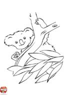 Koala joueur