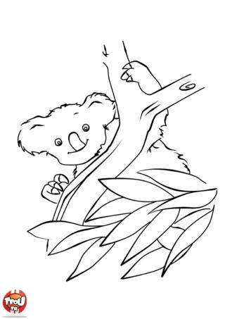 Coloriage: Koala joueur