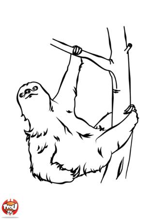 Coloriage: Paresseux pendu à une branche