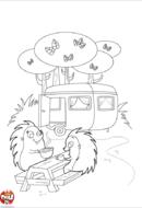 Hérissons au camping