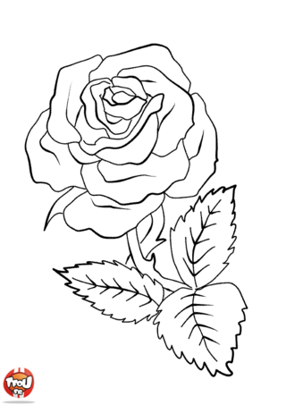 Coloriage: Belle rose