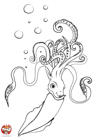 Coloriage: Calamar