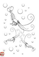 Crevettes dans l'eau