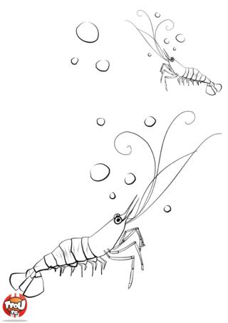 Coloriage: Crevettes et bulles