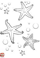 Trois étoiles de mer