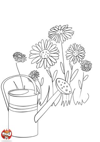 Coloriage: Marguerites