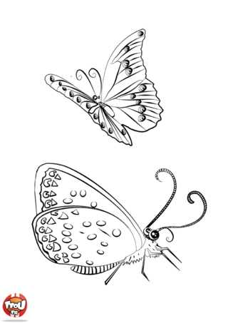 Coloriage: Jolis papillons