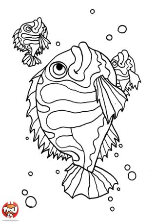 Coloriage: Trois poissons
