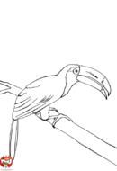 Toucan sur une branche