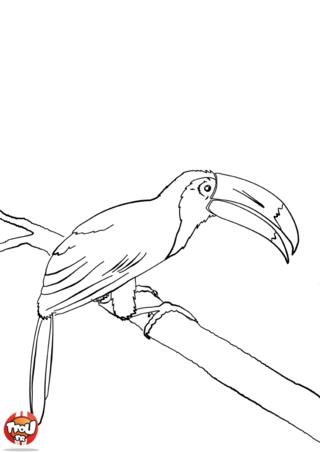 Coloriage: Toucan sur une branche