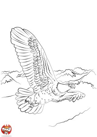 Coloriage: Grand aigle