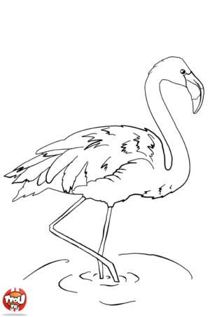 Coloriage: Flamant rose