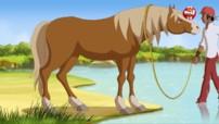 Cheval des villes, cheval des champs - Le Ranch