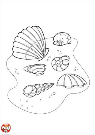 Coloriage: Coquillages