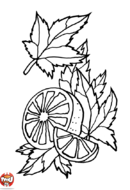Orange et feuilles