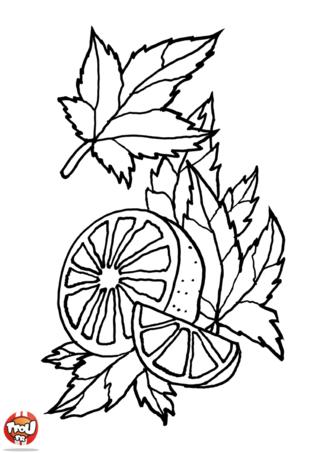 Coloriage: Orange et feuilles