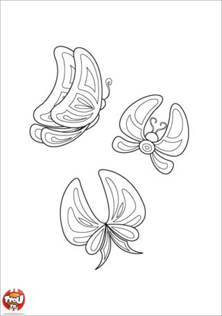 Coloriage: Papillons d'Océanie