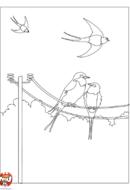 Oiseaux printanniers