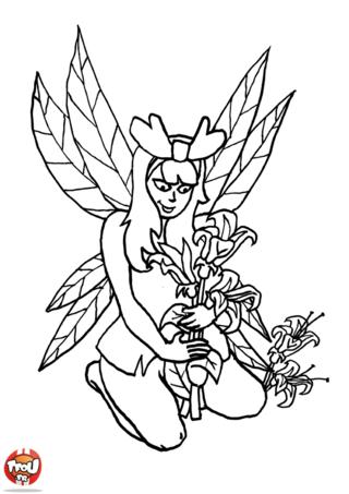 Coloriage: Fée cueille des fleurs