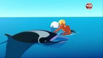 SOS Manta - Oum le dauphin blanc