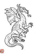 Beau dragon