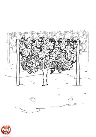 Coloriage: Les vignes