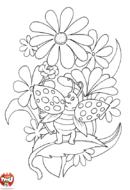 Coccinelle perchée dans les fleurs