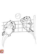 Les éléphants au volley