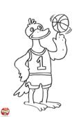Canard basketteur