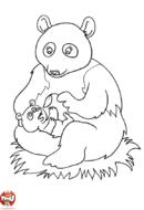 Petit panda et maman panda