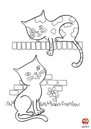 Coloriage : Les chats discutent sur un mur. Imprime vite ce joli coloriage et retrouve tous les coloriages de chats sur TFou.fr