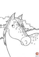 Un beau cheval