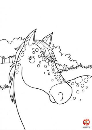 Coloriage : Un beau cheval est à imprimer sur TFou.fr. Alors imprime vite ce beau coloriage et choisi les couleurs de ton choix pour ce beau coloriage de cheval.