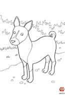 Le beau chien